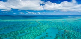 Record Grant to Great Barrier Reef Charity Comes Under Senate Scrutiny