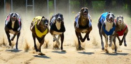 Backflip on Greyhound Racing Ban a 'Devastating Blow' for NFPs