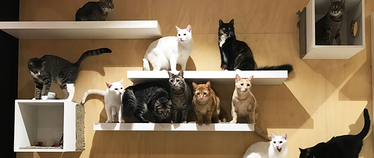Resident cats at The Cat Cafe in Perth