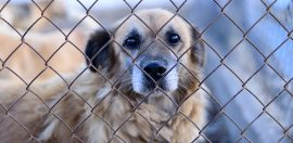 Animal Shelter Loses Charity Status