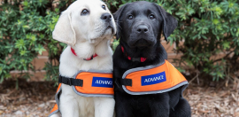 Guide Dogs Named Australia's Most Trusted Charity Brand