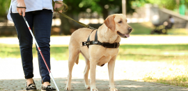 Guide dogs business venture set to shake up traditional charity model