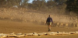 Drought assistance not a sufficient prescription for rural mental health