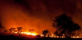 Pro Bono Australia launches a Guide to Giving of Bushfire Appeals