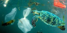 Calls for greater transparency across the plastics supply chain