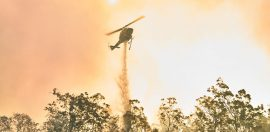 A guide to giving to support WA bushfire recovery